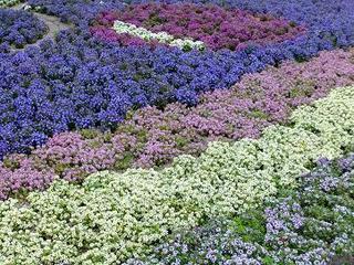 紫白青.JPG